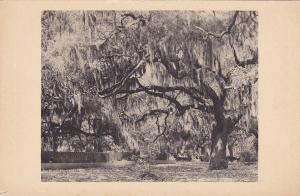 Live Oak Garden , Brookgreen Gardens , South Carolina , 20-30s