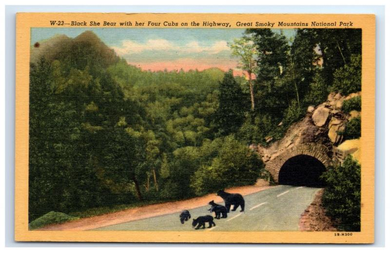 Postcard Black She Bear with Her Four Cubs on Hwy, Great Smokey Mt Nat Park D17