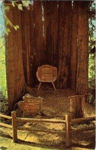Cathedral Tree Redwood Highway California Vintage Standard View Postcard