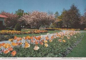 Victoria Park Waimate New Zealand Womens Institute Postcard