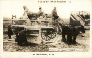 Hampton NB New Brunswick Chicken Farming Exaggeration RPPC c1940s