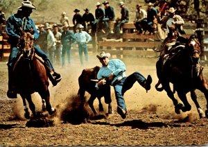 Wyoming Cheyenne Frontier Days Rodeo Scene