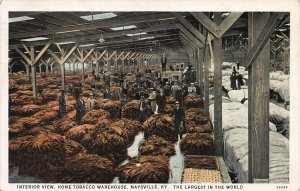 Home Tobacco Warehouse, Maysville, Kentucky, Early Postcard, Used in 1940