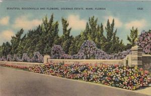 Florida Miami Beautiful Bougenvilla and Flowers On The Deering Estate 1940