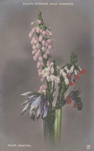 Four Heaths South African Wild Flowers Postcard