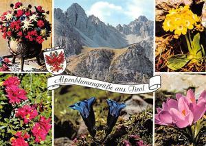 Alpenblumengruesse aus Tirol Alpenblumen Platenigl Alpenrosen Enzian Krokus
