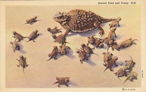 Horned Toad and Young Curteich