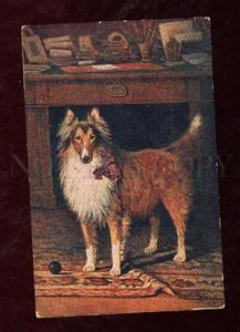 013138 Scottish COLLIE with Bow by MAKO vintage Color Russian
