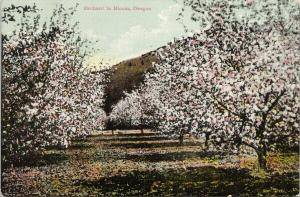 Orchard in Bloom Oregon OR Tree Pink Postcard D93