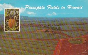 Hawaii Oahu Dole Pineapple Fields 1976
