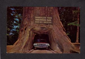 CA Drive Thru Tree Park Redwood Trees Forest Legget California Chandelier