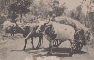 Kikuyu African Transport Antique Kenya Transportation Postcard