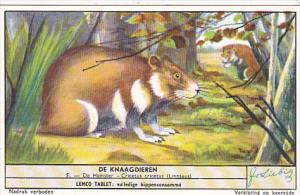 Liebig S1655 Rodents No 5 Hamster