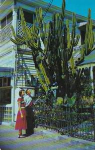 Florida Key West Giant Cactus On Duval Street