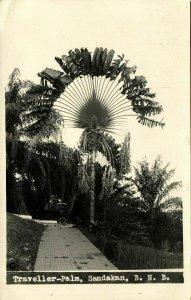 british north borneo, SABAH SANDAKAN, Traveller-Palm (1920s) RPPC Postcard