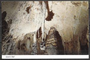 New Mexico, Carlsbad Caverns, Lion's tail, unused