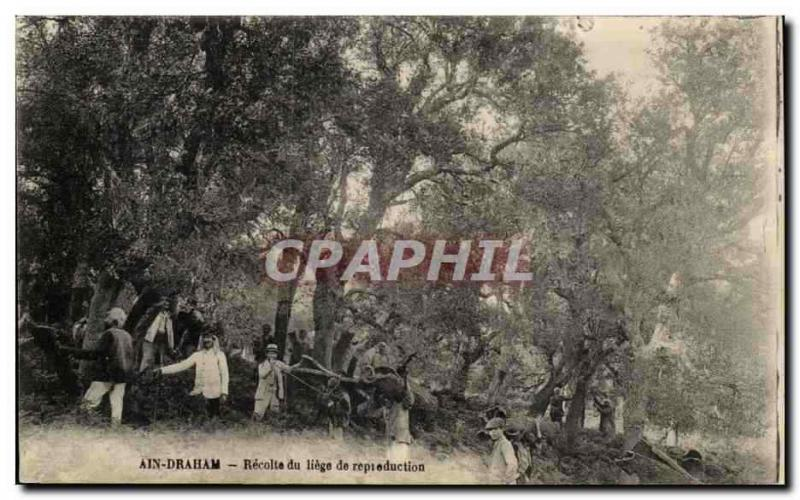 Tunisia Vintage Postcard Ain Draham Collects of Liege of