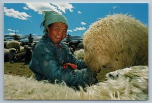 2011 ASIA MONGOLIA Woman milking ewe Ethnic Costume Rare Russian Photo Postcard