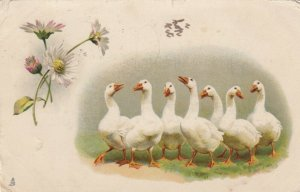 TUCK #1041, PU-1904; Seven Geese, Daisies