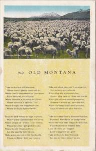 Old Montana Herd Of Sheep