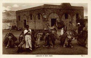 Yemen Aden Caravan at Rest Camels Postcard