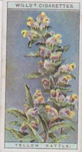 Wills Vintage Cigarette Card Wild Flowers Series No. 32 Yellow Rattle 1923
