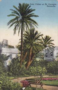 Bermuda Date Palms at St Georges 1933