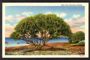 Hola Tree,Hawaiian Islands