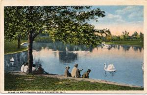 Swan on Lake - Maplewood Park, Rochester, New York - pm 1917 - WB