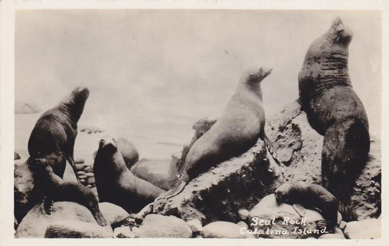 RP: Seal Rock , Catalina Island , California , 20-40s
