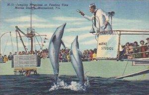Florida Marineland Jumping Porpoises At Feeding Time Marine Studios