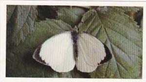 Grandee Vintage Cigarette Card British Butterflies 1984 No 26 Large White