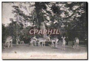 Old Postcard Antelope cervicapra India