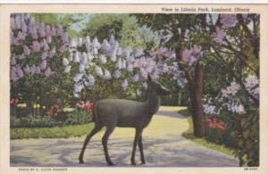 Illinois Lombard View In Lilacia Park Curteeich