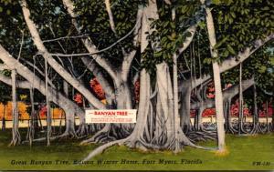 Florida Fort Myers Great Banyan Tree Thomas A Edison Winter Home
