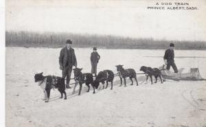 PRINCE ALBERT , Sask. , Canada , 1900-10s ; A Dog Train