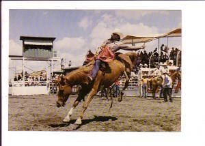 Bareback Bronc Riding, Calgary Exhibition and Stampede, Alberta