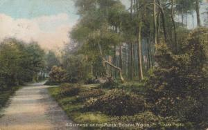 A Glimpse Of The Pines Bostal Wood London Old Postcard