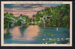 Southern Scene,Cypress Trees and Water Lilies at Sunset