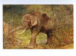 158718 HUNT African ELEPHANT by RANKIN Vintage TUCK PC