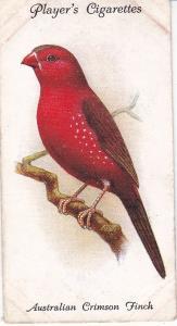 Cigarette Cards Playe Aviary and Cage Birds No 37 Australian Crimson Finch