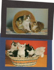 Kittens In Straw Hat & Basket, Postcard, Cats, Black & White Spotted, Tabby