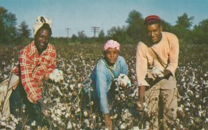 Black Americana , 1950-60s ; Workers in cotton Field
