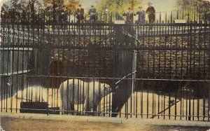 Bear Post Card Bears, Belle Isle Park Detroit, Michigan, USA Unused