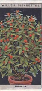 Wills Vintage Cigarette Card Flower Culture In Pots No 44 Solanum  1925
