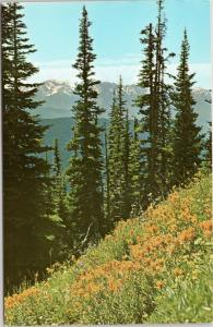OIympic National Park Washington - Alpine Flowers in the Olympic Mountains