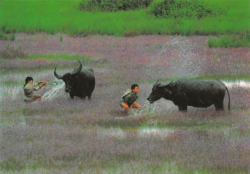 Vietnam Mekong Delta, Country field Long An Bulls