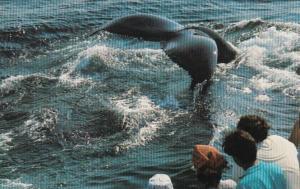 Massachusetts Cape Cod Provincetown Dolphin Fleet Whale Watching