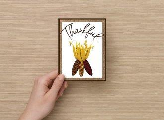 Set of 6 Fine Art Postcard Thankful, Indian Corn, Celebrating Autumn Greetings