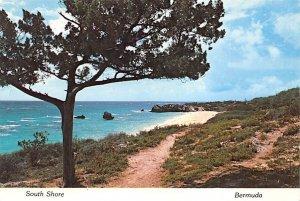 A Bermuda Cedar on the South Shore Bermuda Island Unused